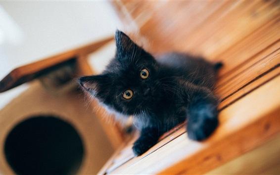 Wallpaper Lovely black kitten baby