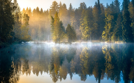 Wallpaper Morning forest, fog, lake, trees, autumn, Finland