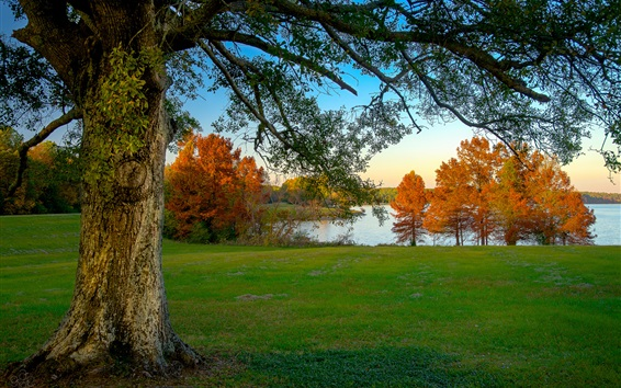 Wallpaper Morning, trees, autumn, grass, lake