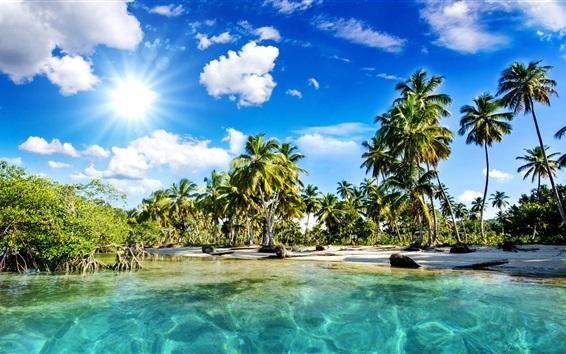 Wallpaper Palm trees, coast, beach, blue sky, clouds, sun rays