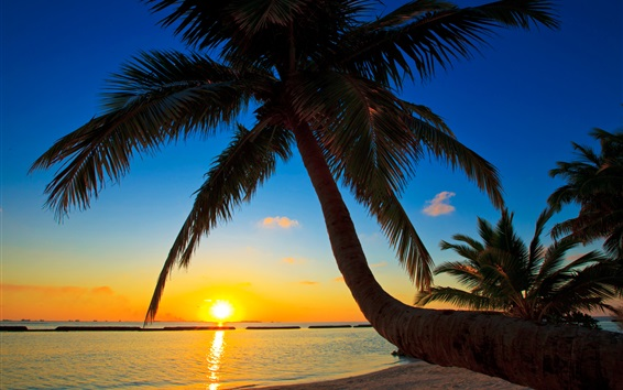 Palma, Maldives, sunset, beach, sea, palm tree Wallpaper Preview