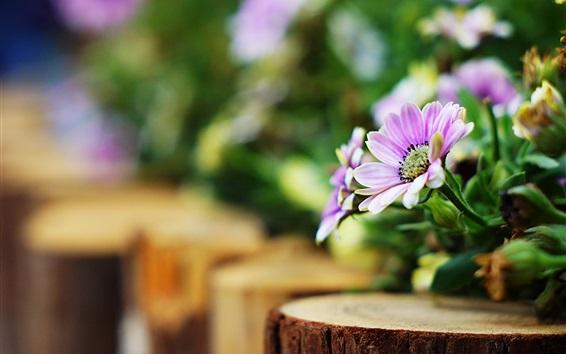 Wallpaper Pink flowers, bokeh