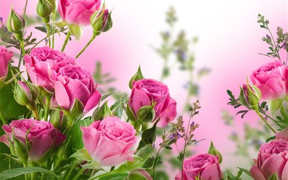 Fond d'écran Rose rose fleurs, jardin