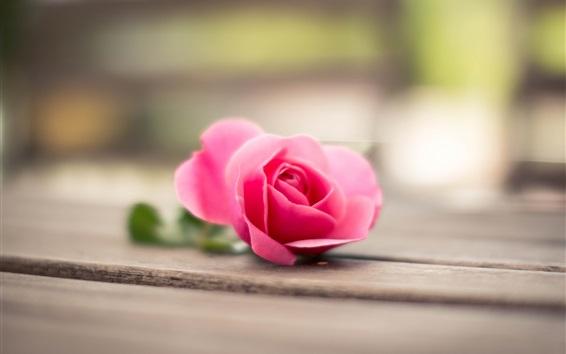 Papéis de Parede rosa cor de rosa, placa de madeira, bokeh