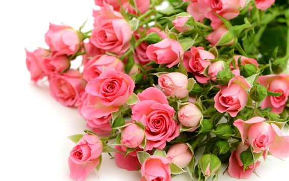 Wallpaper Pink roses flowers, bouquet, white background