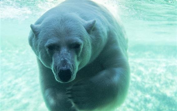 水中にいる白い熊