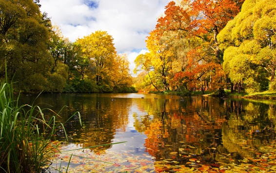 Wallpaper Russia, Saint Petersburg, park, pond, trees, autumn