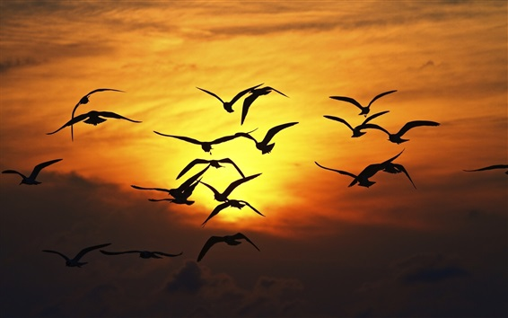Wallpaper Seagulls flying at sunset