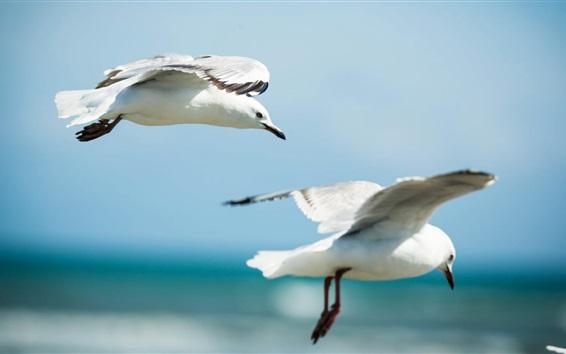 Обои Чайки летают в небе