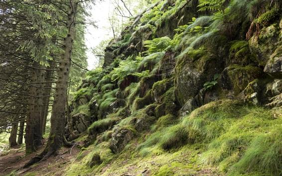 Fondos de pantalla Piedras, pendiente, árboles, hierba