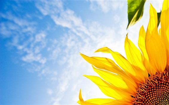 Wallpaper Sunflower, blue sky