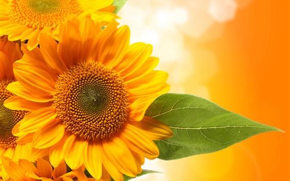 Wallpaper Sunflowers, yellow petals, orange background