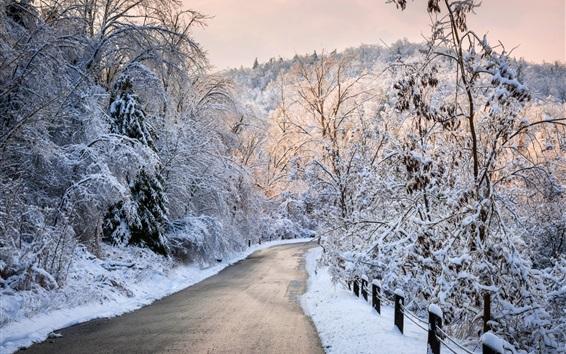 壁紙 厚い雪の冬、木、道路
