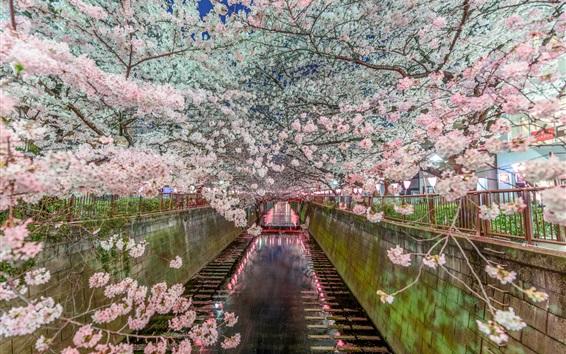 Wallpaper Tokyo, Japan, Sakura, beautiful flowers