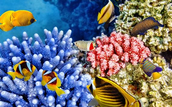 Papéis de Parede peixes tropicais, coral, subaquático, animais marinhos