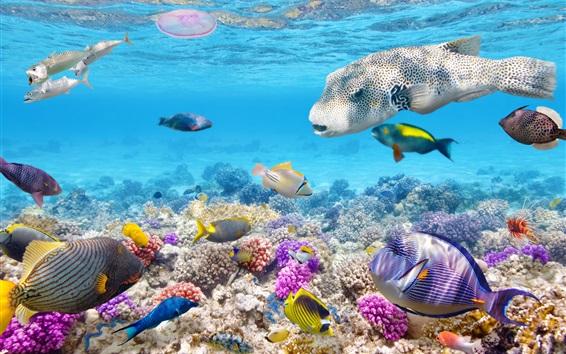 Fond d'écran poissons tropicaux sous-marine, récif corallien, océan