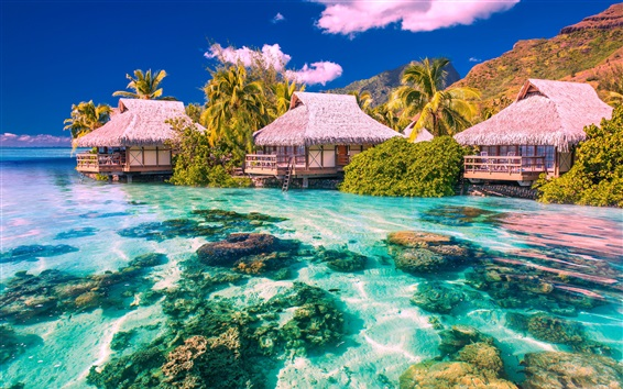 Wallpaper Tropical landscape, palm trees, houses, sea, beach, stones