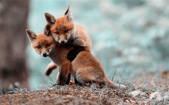 Обои Две симпатичные маленькие лисы