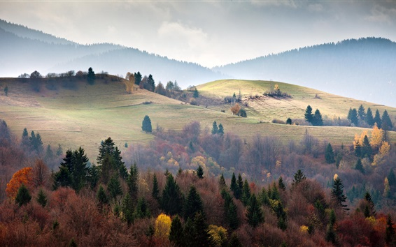 Wallpaper Ukraine, Carpathians, forest, trees, fog, morning