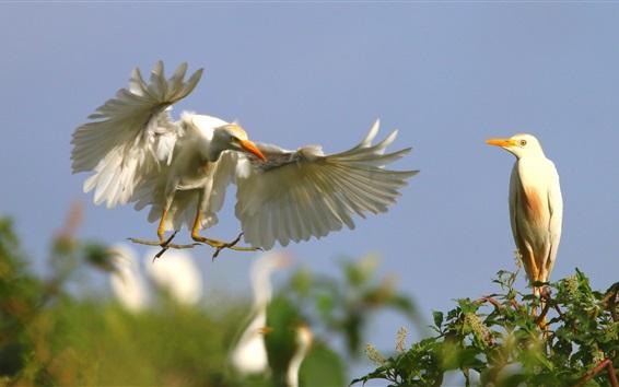 Fond d'écran Blanc plumes oiseaux