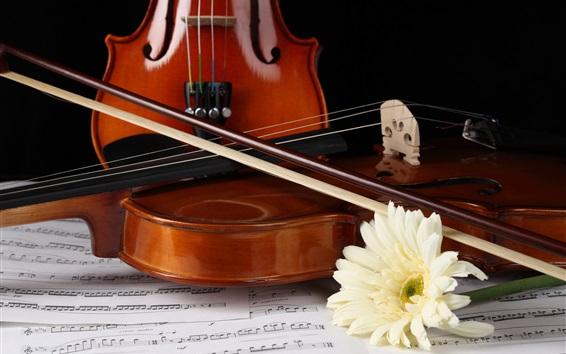 Fond d'écran gerbera blanc, violon
