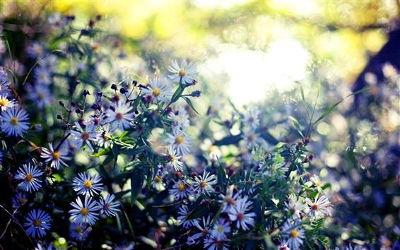 Fond d'écran Fleurs sauvages, été, soleil, éblouissement, flou