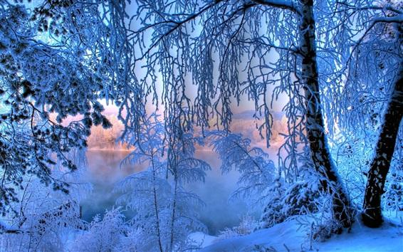 Fond d'écran Hiver aube, neige épaisse, les arbres, les brindilles, rivière