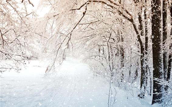 Обои Зимняя природа, деревья, белый снег