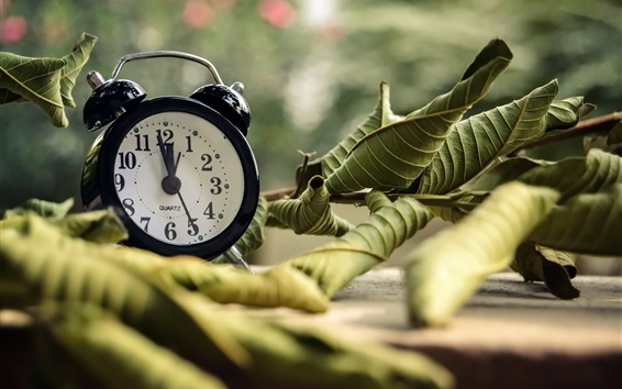 Wallpaper Alarm clock, leaves