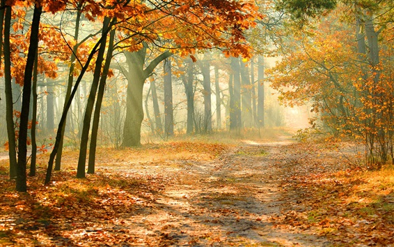 Обои Осенний лес, деревья, красные листья, солнечные лучи, туман