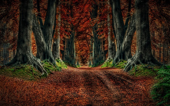 Wallpaper Autumn nature, road, trees, leaves