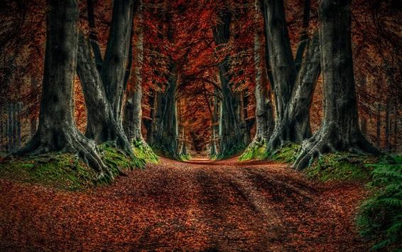 Обои Осенью природа, дорога, деревья, листья