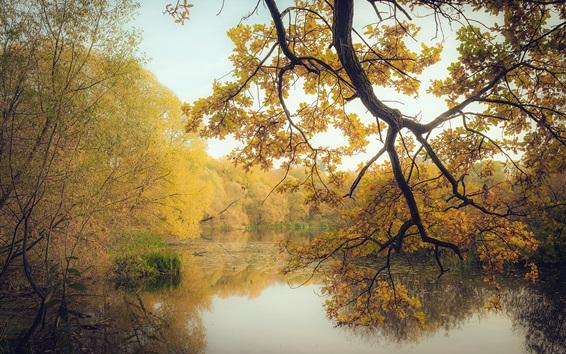Обои Осень, пруд, деревья, желтые листья