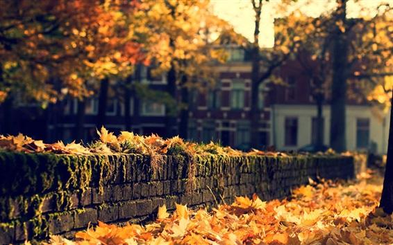 Wallpaper Autumn, town, yellow leaves, trees, sunshine