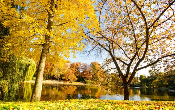 Wallpaper Beautiful autumn, yellow leaves, river, trees
