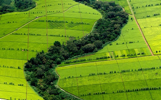 Wallpaper Beautiful green fields top view