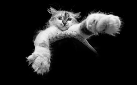 Wallpaper Black and white, cat, paw