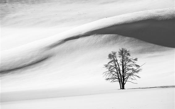 Papéis de Parede Preto e branco, neve, inverno, árvore