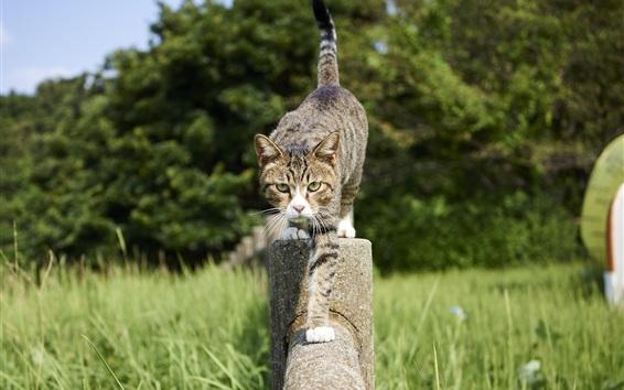 Обои Прогулка кота на заборе