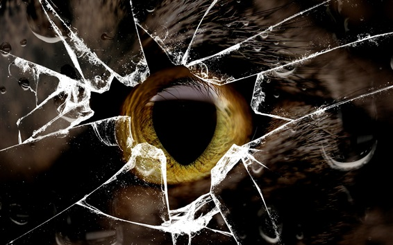 Обои Cat желтый глаз, стекло сломанной