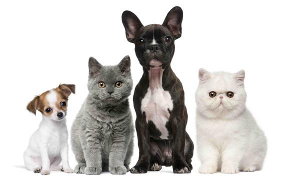 Papéis de Parede Gatos e cães, branco e preto