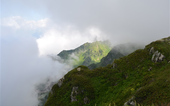 Обои Кавказские горы, облака, трава, деревья