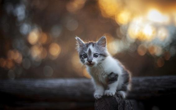 Wallpaper Cute furry kitten, fence, bokeh
