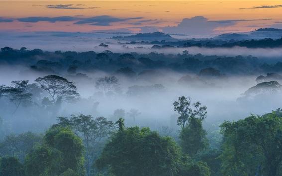 Wallpaper Dawn nature landscape, trees, fog