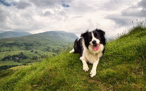 Wallpaper Dog in the mountain top
