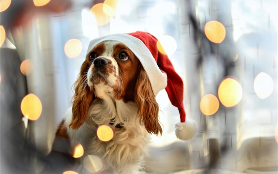 Wallpaper Dog with Christmas hat