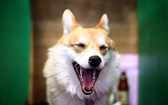 Papéis de Parede Cão, bocejo, rosto