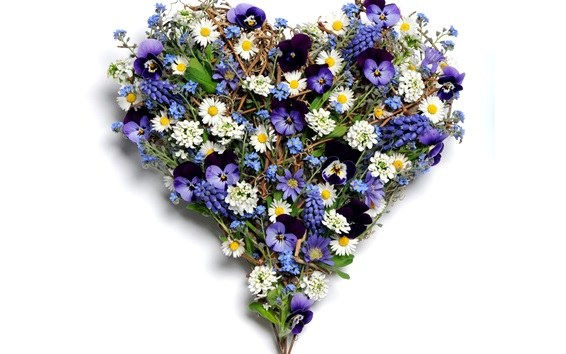 Wallpaper Flowers love heart, pansy, chamomile, grape hyacinth