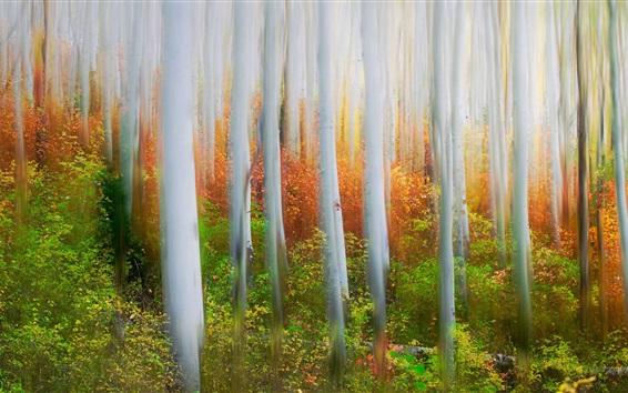 壁紙 森林、木々、霧、アートスタイル