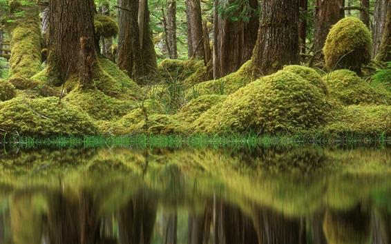 Wallpaper Forest, trees, pond, grass, moss, green